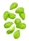 Falling basil leaves isolated on white background with clipping path