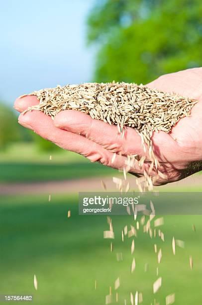 Chute herbe de graines