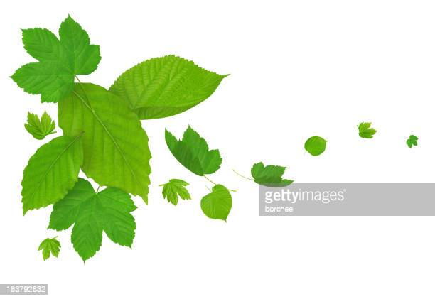 Cadere foglie verdi
