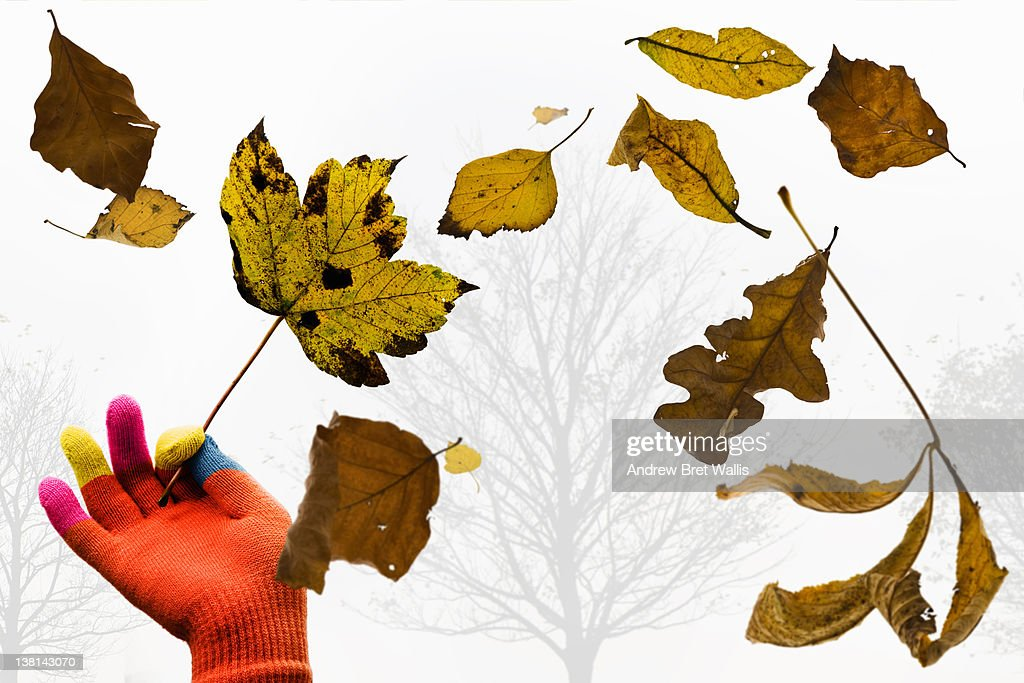 Falling leaves : Stock Photo
