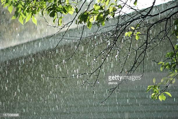 falling rain nature background
