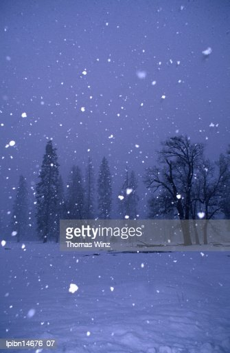 Falling snow., Yosemite National Park, California, United States of America, North America