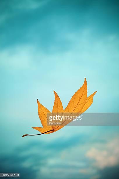 Falling Yellow Autumn Leaf