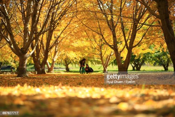 Family Amidst Trees At Park During Autumn