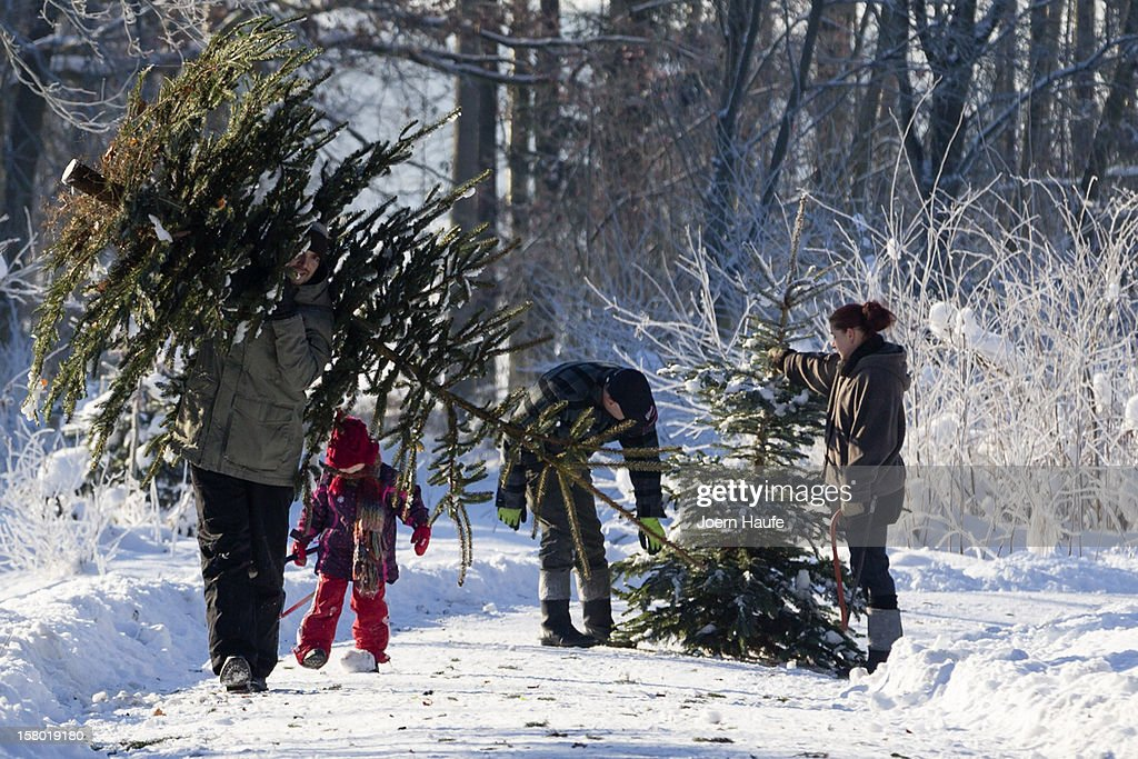 A family carry Christmas trees they chose and cut down themselves in a forest on December 8, 2012 in Fischbach, Germany. Forestry officials in the state of Saxony officially opened the 2012 Christmas tree season for people who want to retrieve their tree from designated forests rather than just buying it readily cut.