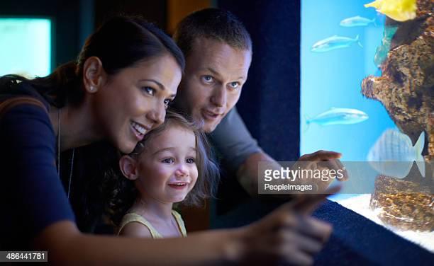 Family day at the aquarium