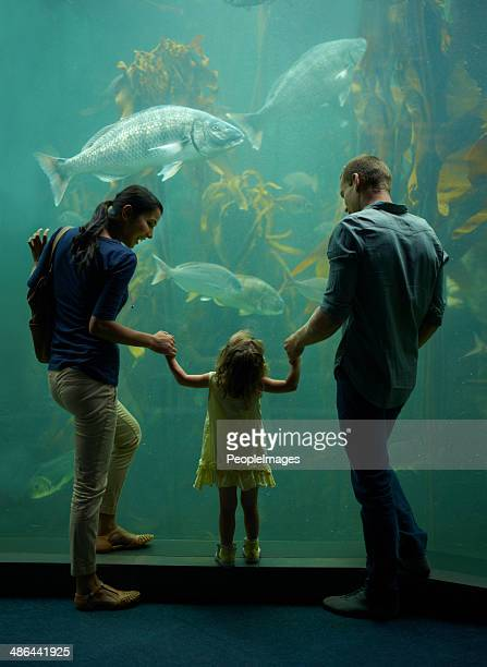 Family day at the aquarium