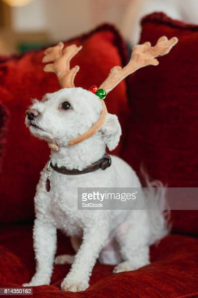 Family Dog Wearing Reindeer Antlers