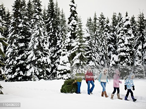 Family dragging Christmas tree out of snowy forest : Stock Photo