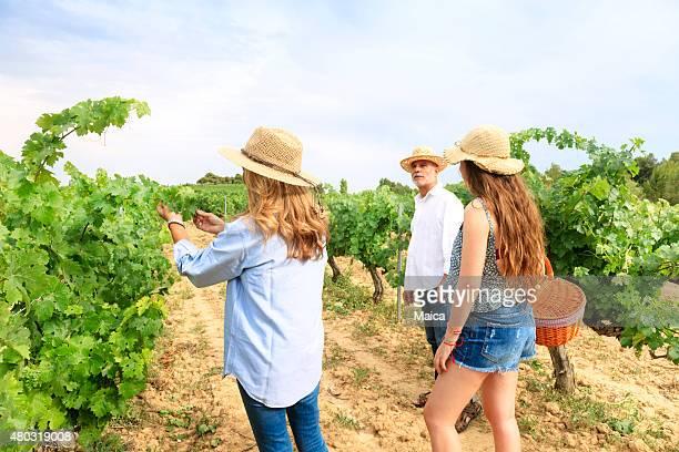 家族のブドウの収穫