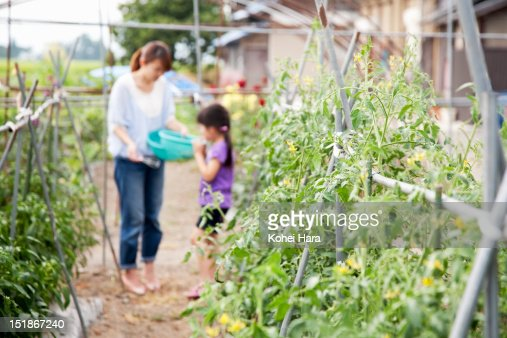 family harvesting crops in the farm : Stock Photo