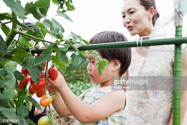 family harvesting on a farm