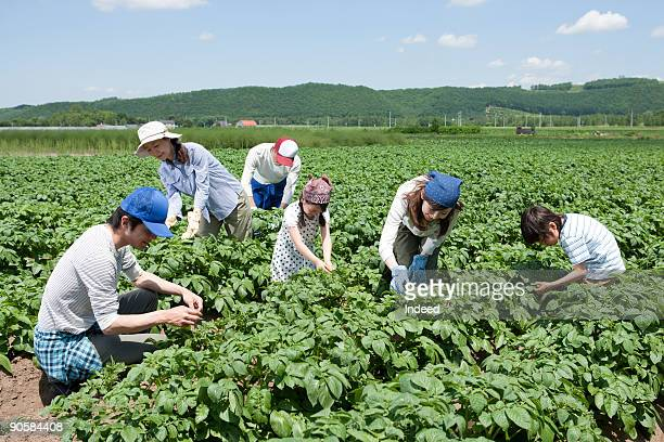Family in potato field