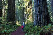 family enjoying hiking in gorgeous redwood national park