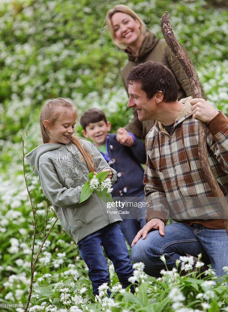 Family in woods picking flowers : Stock Photo
