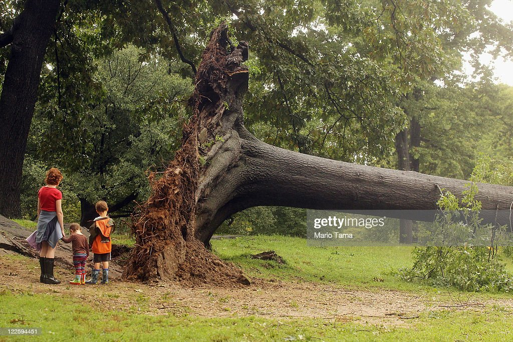 A family inspects a downed tree in Central Park after Hurricane Irene dumped more than six inches of rain on August 28, 2011 in New York City. The hurricane hit New York as a Category 1 storm before being downgraded to a tropical storm.