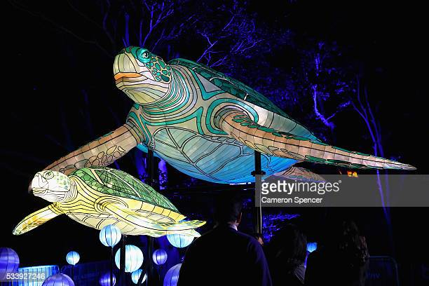 A family look at marine turtle light sculptures during a media preview of Vivid Sydney illuminated displays at Taronga Zoo on May 24 2016 in Sydney...