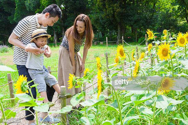 Family looking at the sunflower in the park