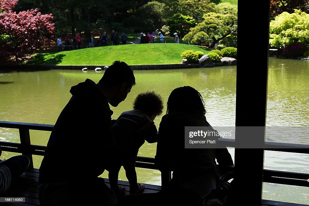 A family looks at fish in a pond at the Brooklyn Botanical Garden on May 5, 2013 in New York City. The botanical garden, which sits on 52-acres, features numerous gardens and a conservatory. The Brooklyn Botanical Garden is famous for their cherry blossoms, which typically bloom at the end of April and are a centerpiece of the Garden's annual cherry blossom festival which attracts thousands of visitors.