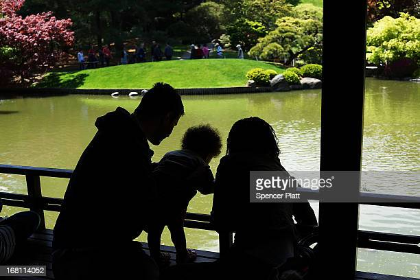 A family looks at fish in a pond at the Brooklyn Botanical Garden on May 5 2013 in New York City The botanical garden which sits on 52acres features...