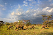 Family of African elephants at sunset