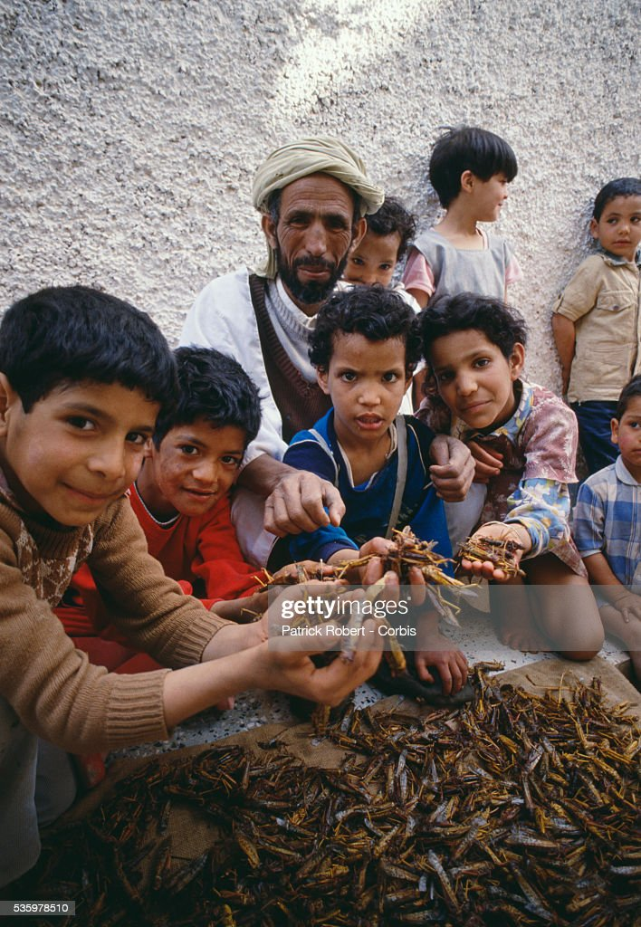 A family of Algerian children hold handfuls of desert locusts, which are first boiled, then dried, salted, and eaten. The invasion of locusts in Algeria, and throughout Africa, drastically reduced food production, forcing the government to provide food aid programs and emergency assistance to rural communities.