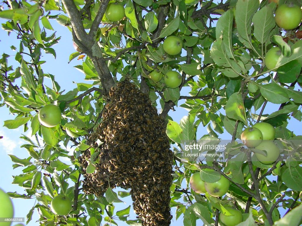 Família de abelhas : Foto de stock