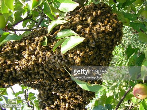 Family of bees : Stock Photo