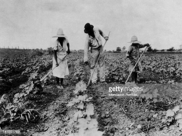A family of black slaves working on a plantation Saint Louis