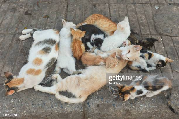 A family of cats playing on the ground seen in Rabat's medina On Friday June 30 in Rabat Morocco
