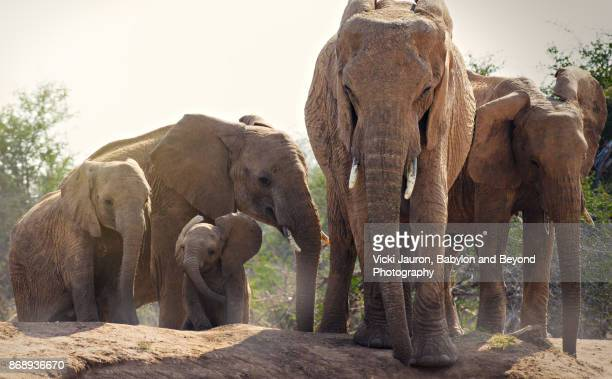 A Family of Elephants in Laikipia