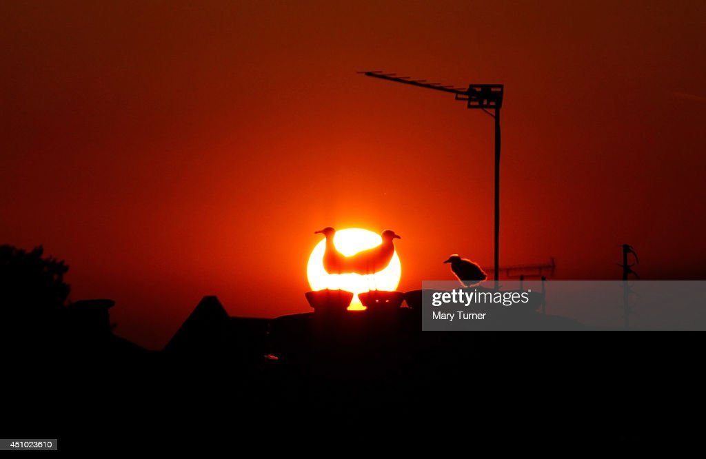 A family of seagulls are silhouetted on the rooftops of Peckham as the sun goes down on June 21, 2014 in London, England. The UK is enjoying a hot start to the summer and forecasters have predicted that the first week of Wimbledon will be dry and fine.