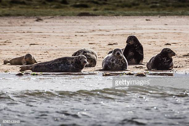 Family of seals