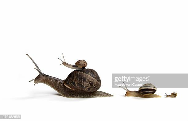 Family of Snails