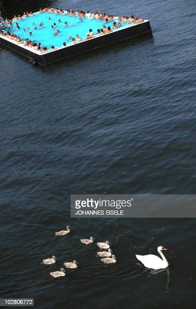 A family of swans swim past bathers at Berlin's socalled 'Badeschiff' in the river Spree on July 11 2010 in Berlin as the country experiences a...