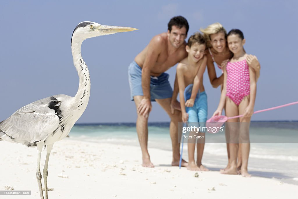 Family on beach looking at bird : Stock Photo