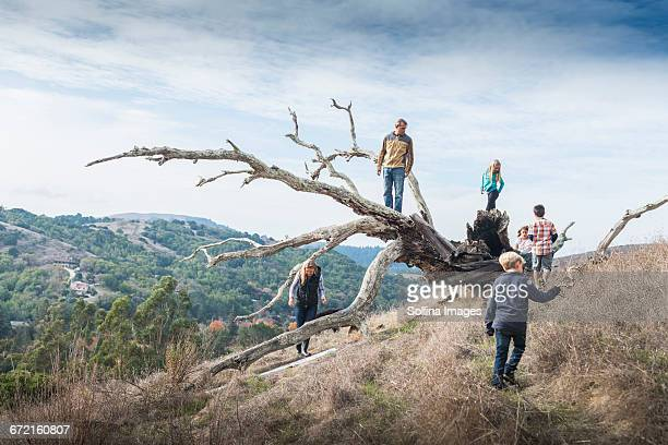 Family playing on tree outdoors