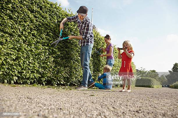 Family pruning hedge together