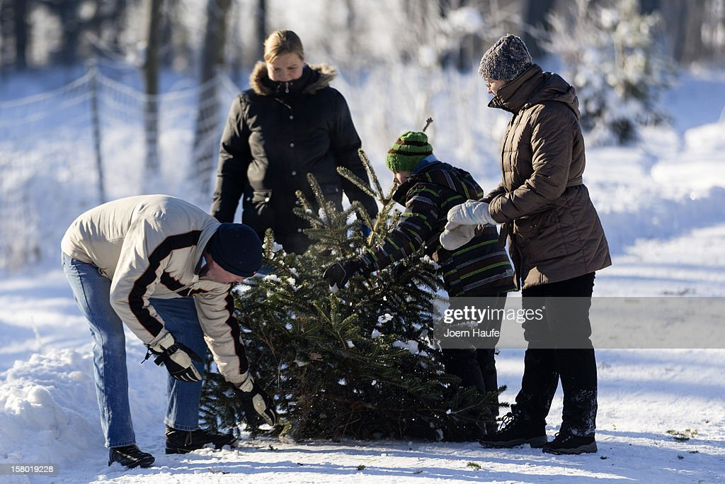 A family pull a Christmas tree they chose and cut down themselves in a forest on December 8, 2012 in Fischbach, Germany. Forestry officials in the state of Saxony officially opened the 2012 Christmas tree season for people who want to retrieve their tree from designated forests rather than just buying it readily cut.