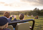 Family safari, photographing lions from vehicle