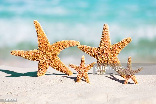 Family Summer Beach Holiday Vacation with Children, Starfish Party