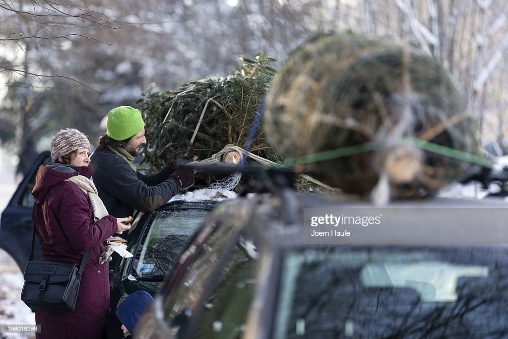 A family tie a Christmas tree they had chosen and cut down themselves to the roof of their car at a forest on December 8, 2012 in Fischbach, Germany. Forestry officials in the state of Saxony officially opened the 2012 Christmas tree season for people who want to retrieve their tree from designated forests rather than just buying it readily cut.