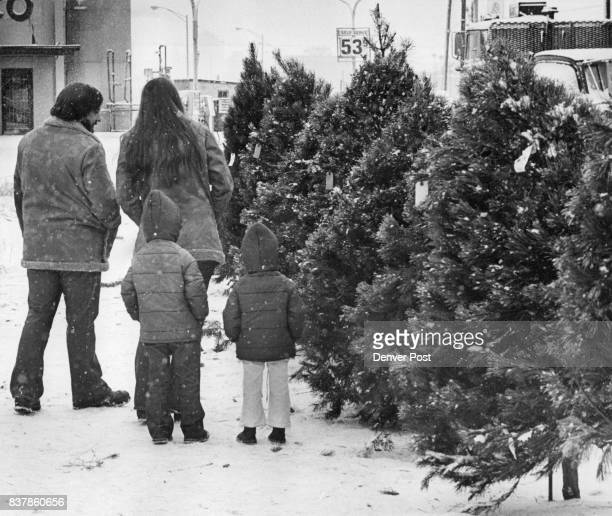 Family Tree Choosing a Christmas tree is important business and is often done best by the whole family Mr and Mrs Steve Curry 8044 Conifer Road and...