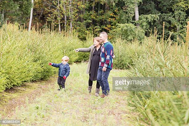 Family walking in a grove of firs