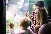 Family watchig fishes at a big aquarium