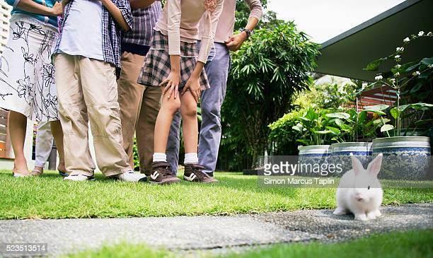 Family Watching Pet Rabbit on Lawn