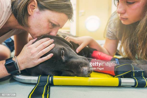 Family with dying dog
