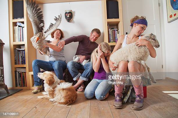 Family with fluttering goose at home