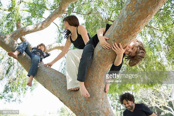 Family with two boys climbing on park tree