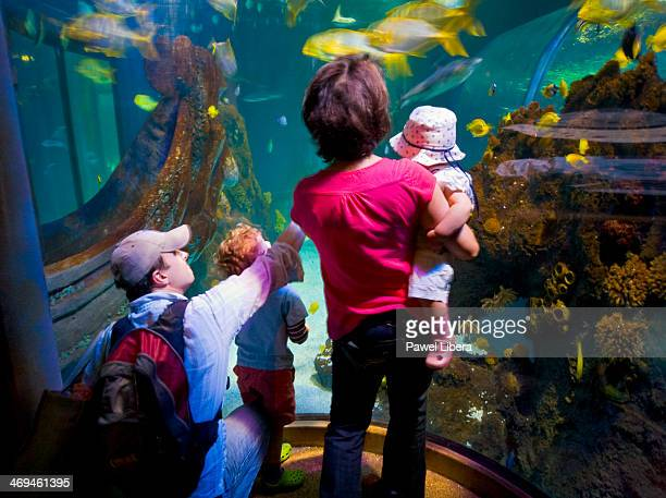 Family with two children looking at fish tank at the Sealife Centre in Chessington World of Adventures